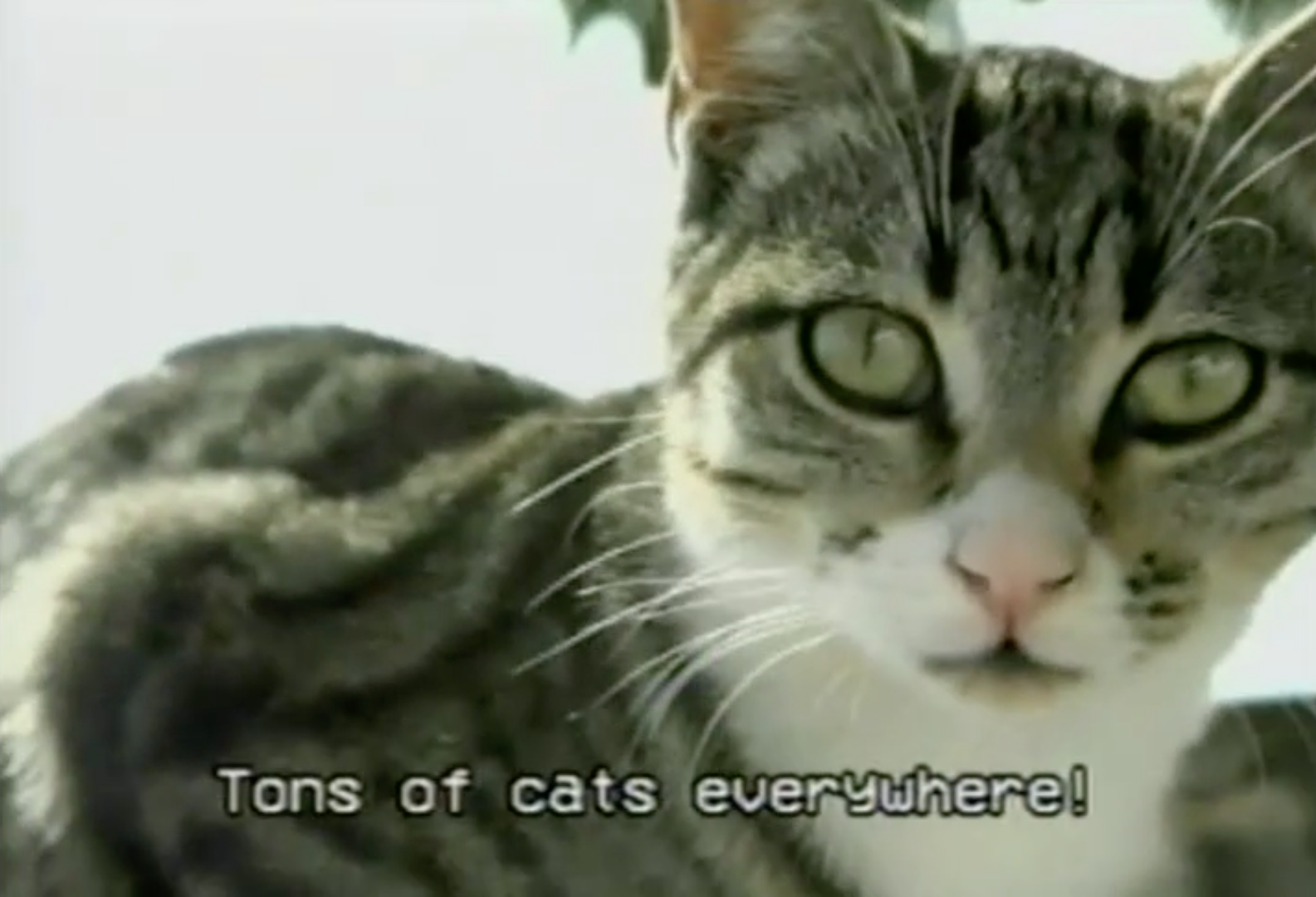 Check out the cat-based travel music video you never knew you needed