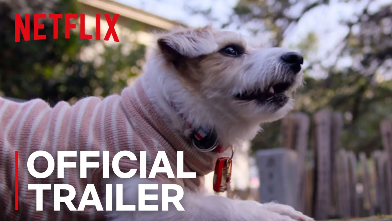 Netflix's new series about dogs is a pedigree above the rest