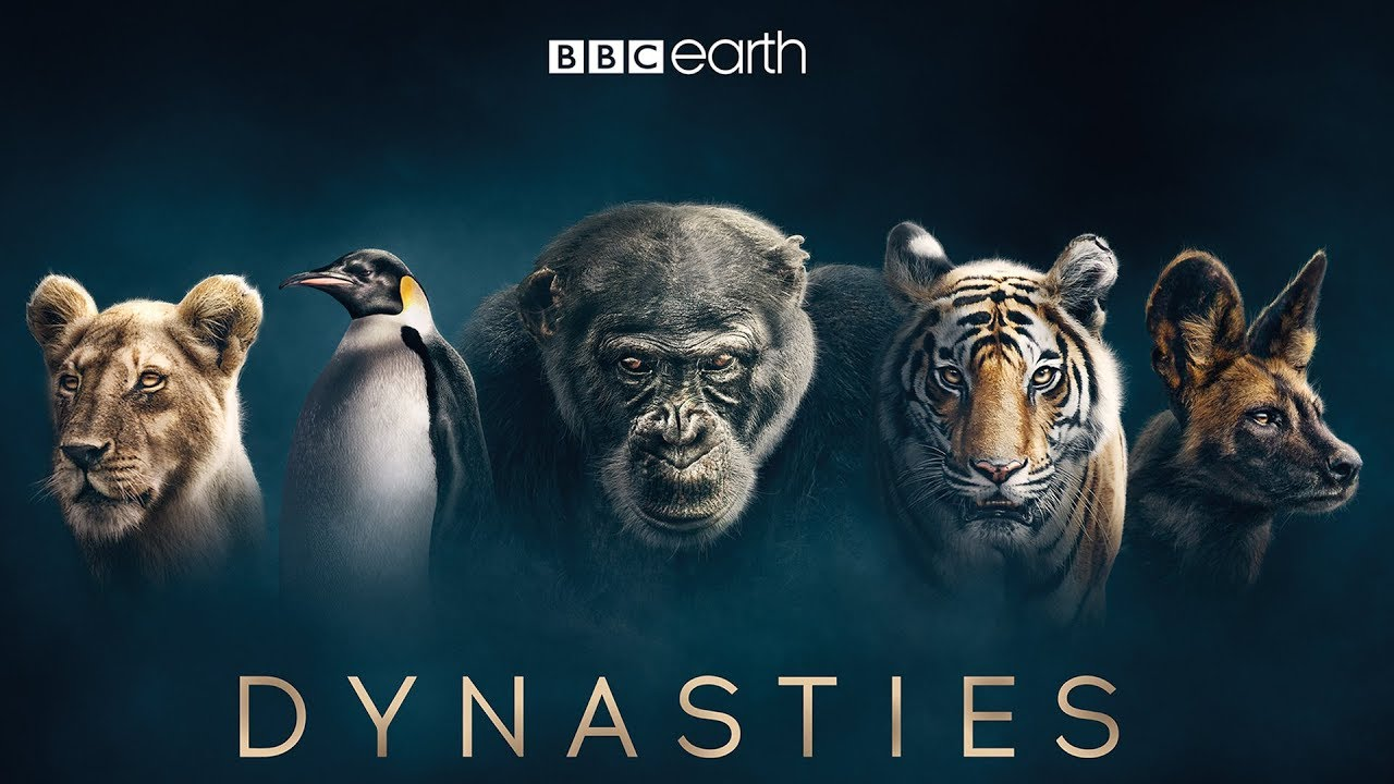 First look at David Attenborough's new series Dynasties