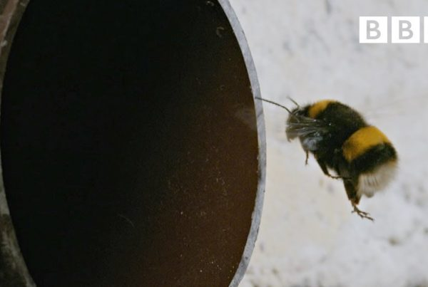 the incredible secret life of london's bees - bbc