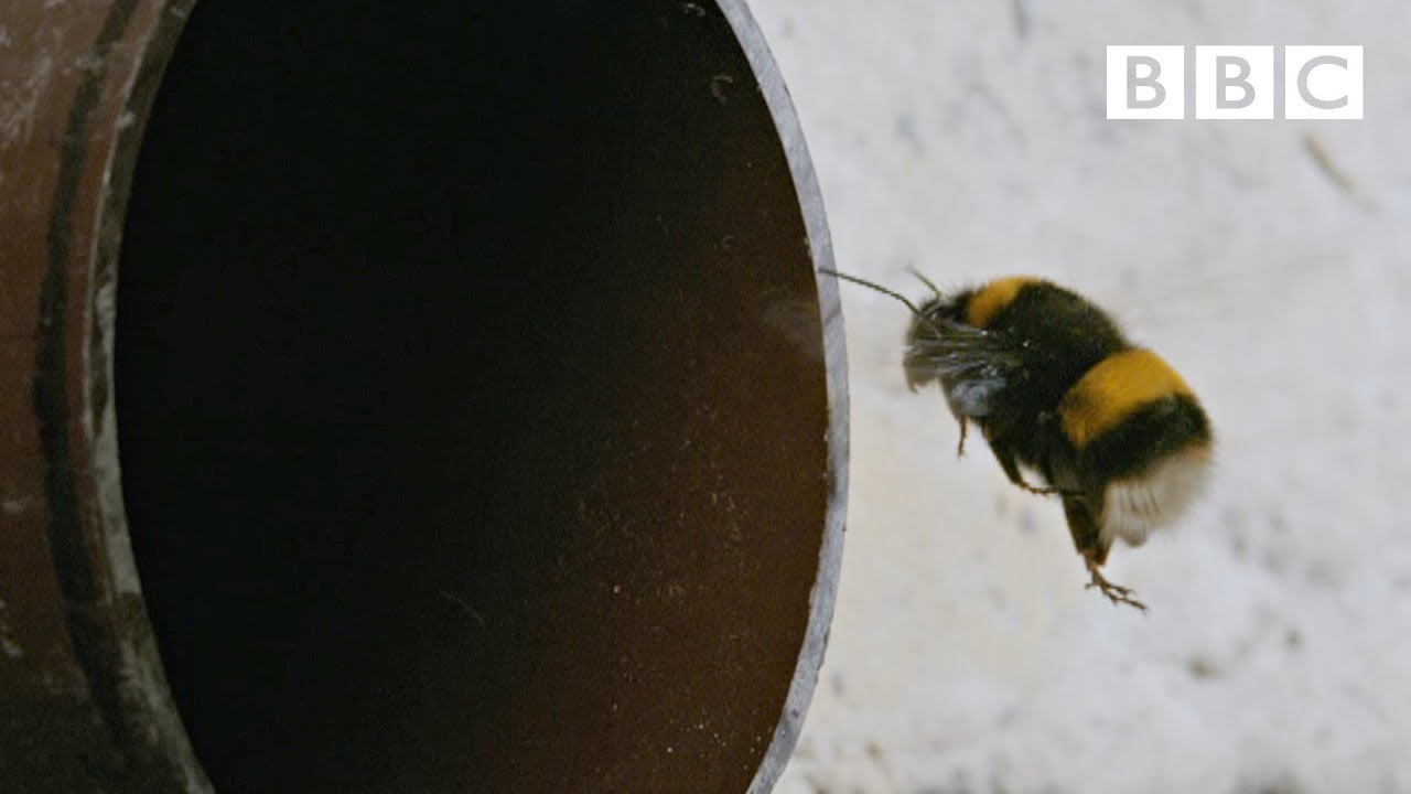 Explore the secret life of London's bees
