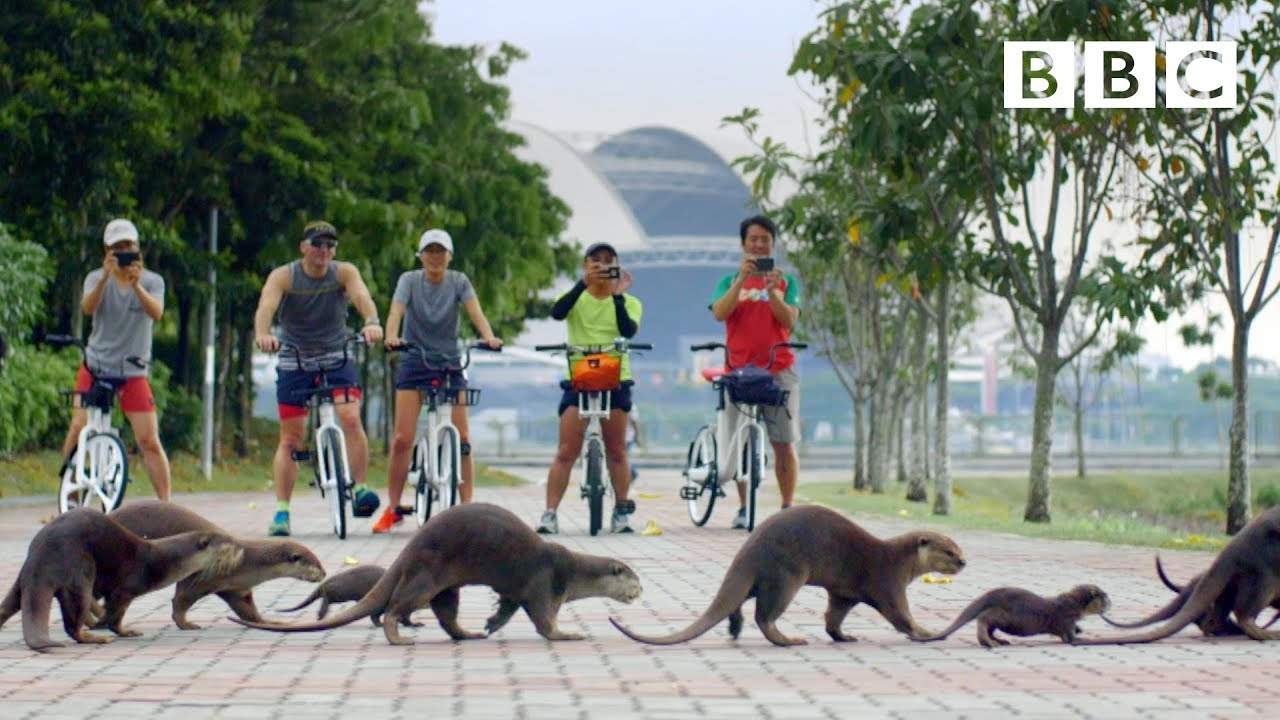Meet the otter family who are thriving in Singapore