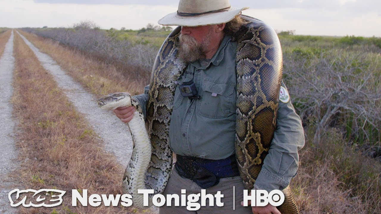 Meet the bounty hunters catching pythons in Florida with VICE