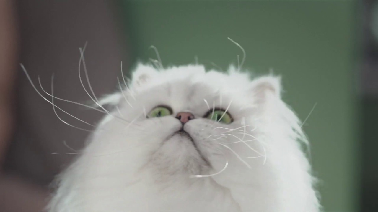 Snowdrop The Cat Stars In This Funny Specsavers Ad
