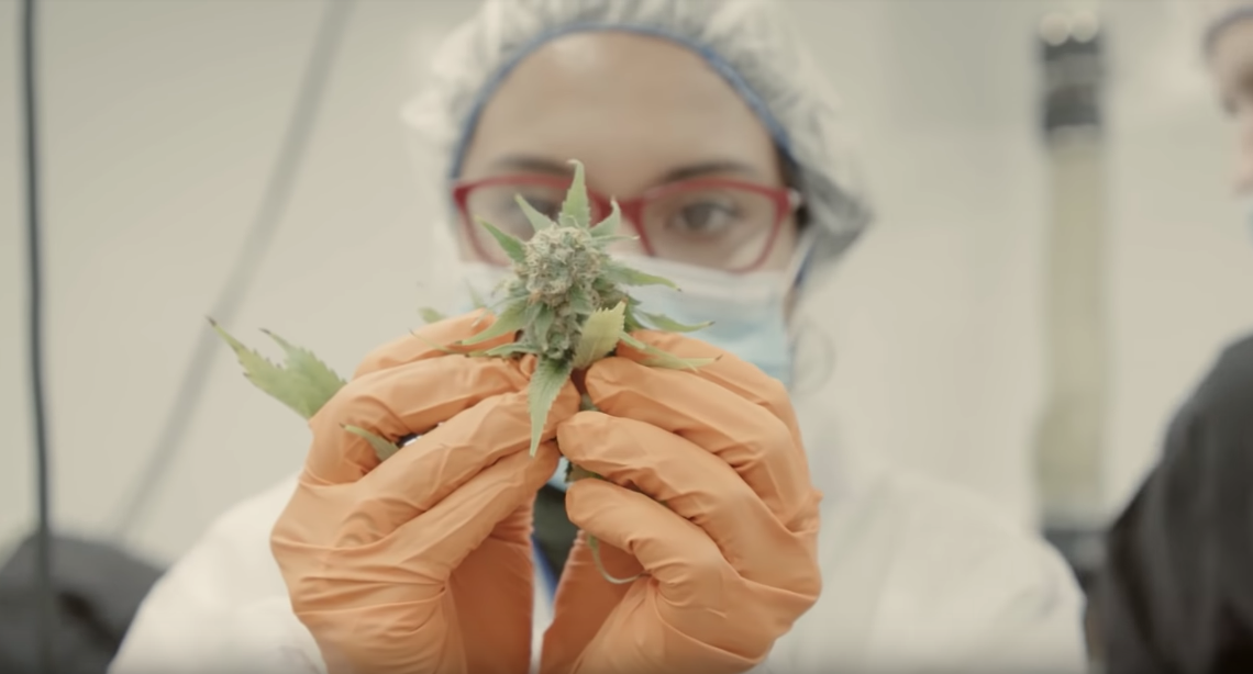 Step Inside The Multi-Billion Dollar Legal Cannabis Industry