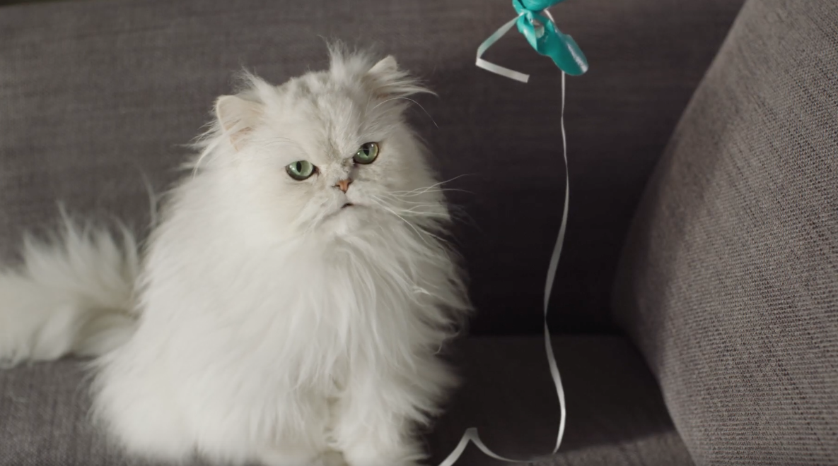 A Cat Talks To Its Owner In This Wacky Ad From Onken!