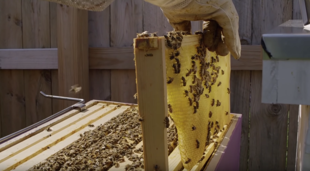 Detroit's Urban Beekeepers Are Transforming The City