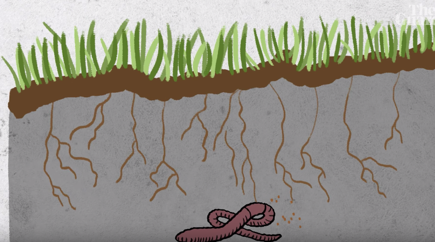The Guardian Tell Us How Soil Will Save The World