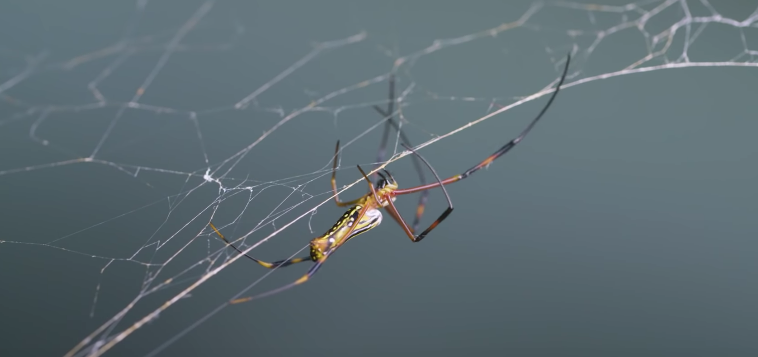 Meet The Scientists That Are Harnessing The Power Of Spiderwebs