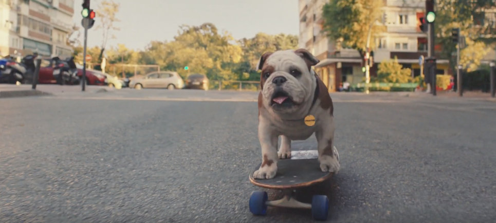 A Dog Goes For A Ride On A Skateboard In This Brill Ad From Churchill
