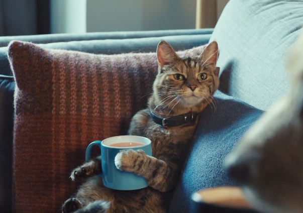 A Cat And A Dog Talk Over A Cup Of Tea In This Ad From Tetley