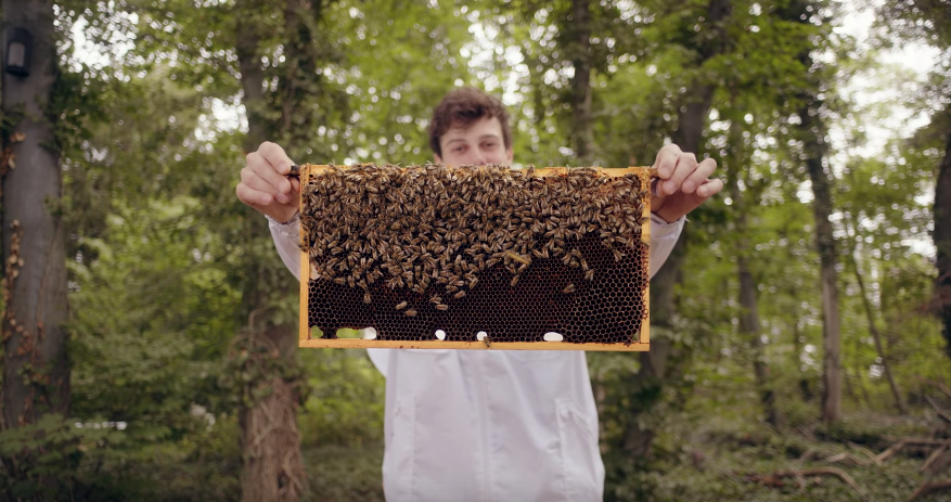 How Google Is Using Machine Learning To Save Bees