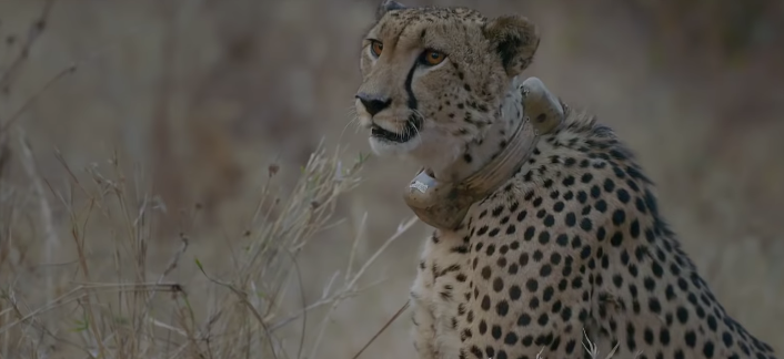 National Geographic Meets The Amazing Rangers Who Are Saving Africa's Wildlife