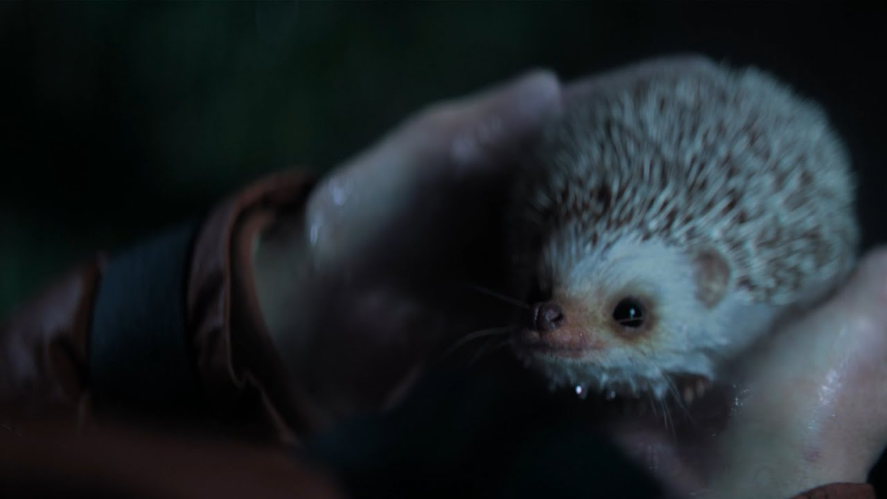 A Cute Hedgehog Stars In This Advert From The Staatsloterij Lottery