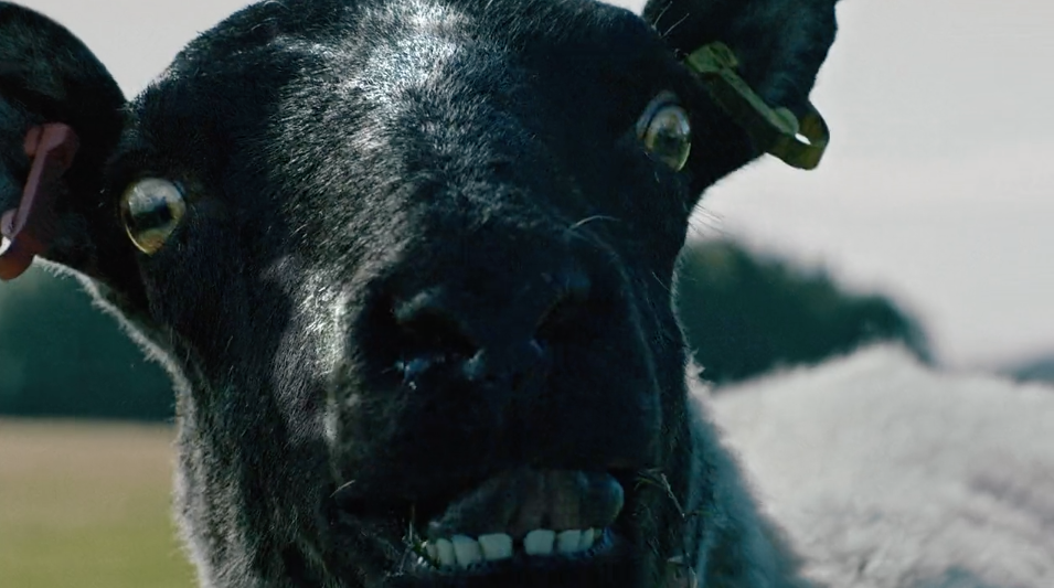 "Watch Subaru's Funny Ad ""Flashback"" Where A Sheep Gets The Fright Of Its Life"